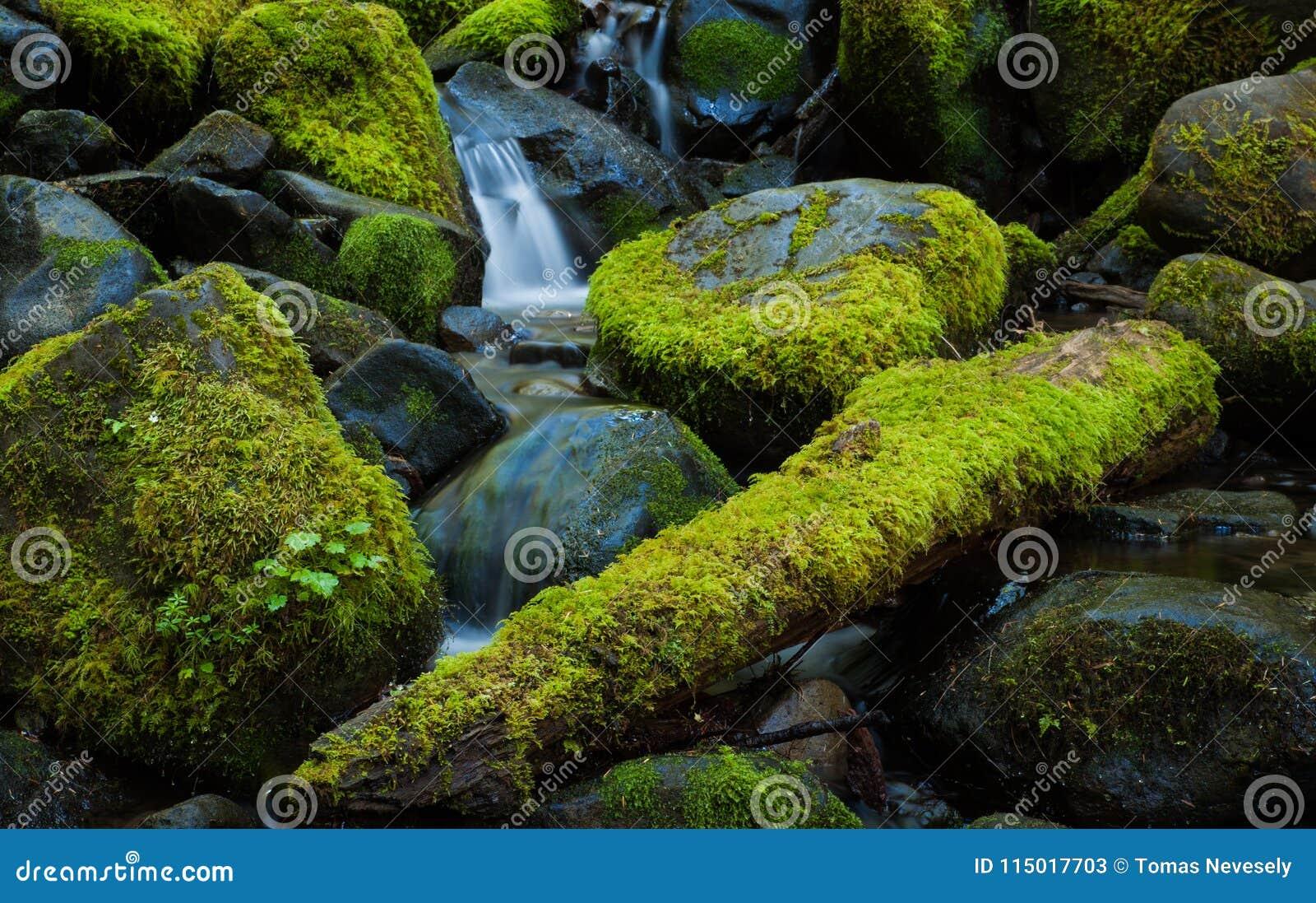 Moss Covered Rocks In A Mountain Stream, Washington Stock