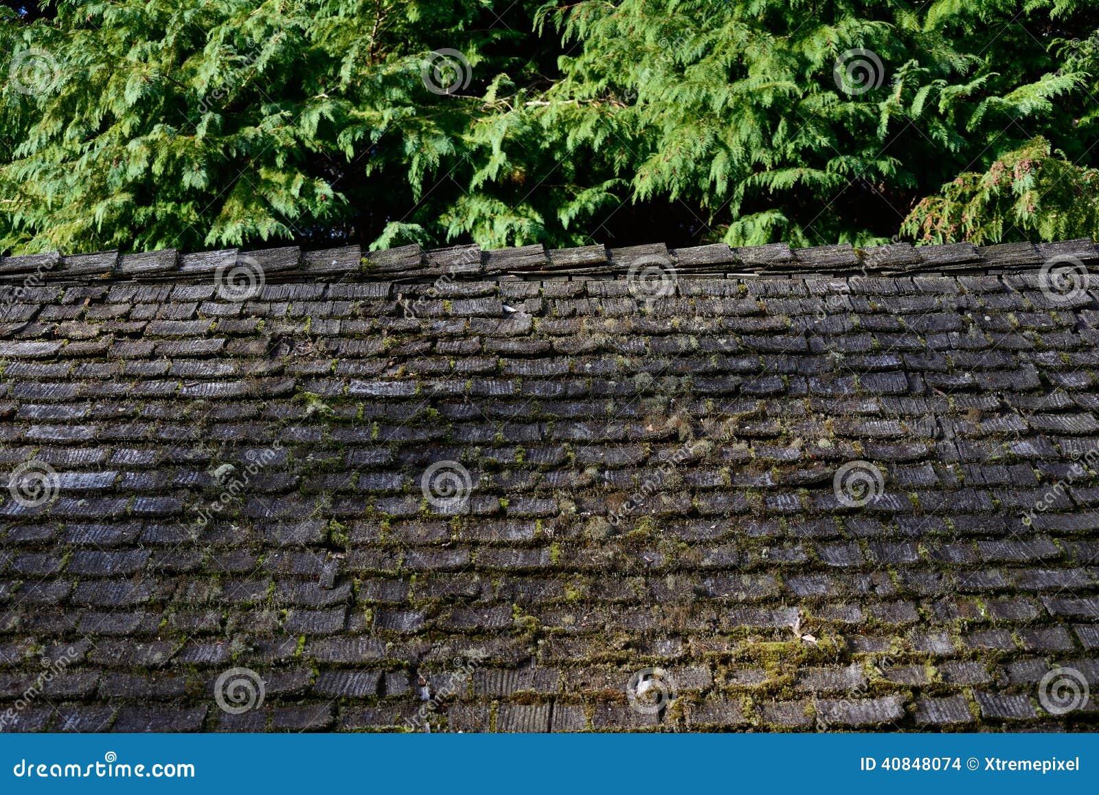 Moss covered shingle roof