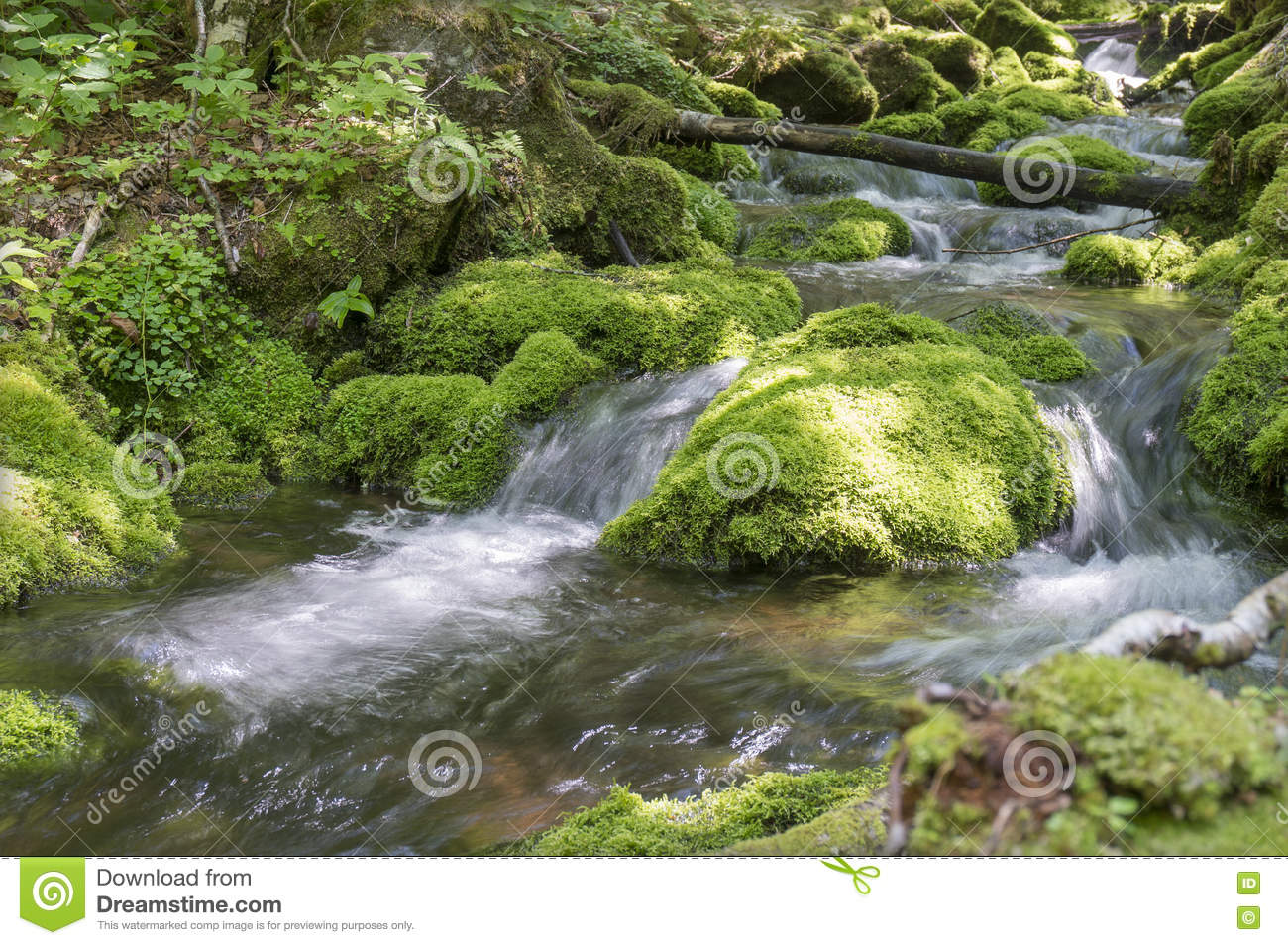 Moss covered stones in a brook in the Mount Carleton, New Brunswick, Canada