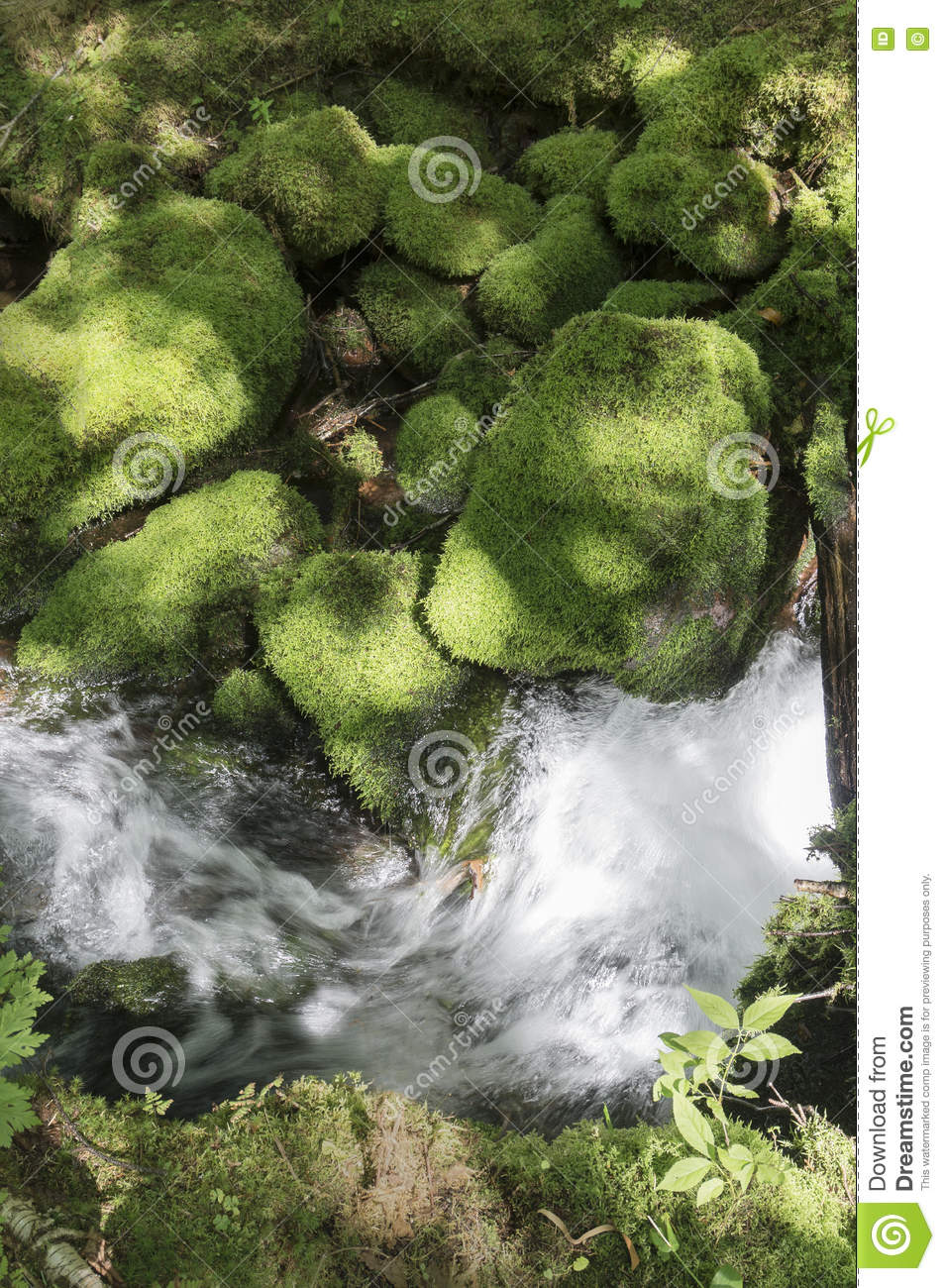 Moss covered stones near a brook in the trail of the Mount Carleton, New Brunswick, Canada