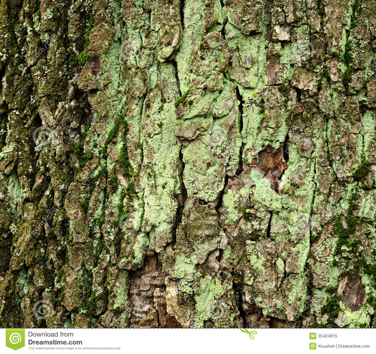 what is a tree trunk covered with 4 letters - moss covered tree bark royalty free stock photo image