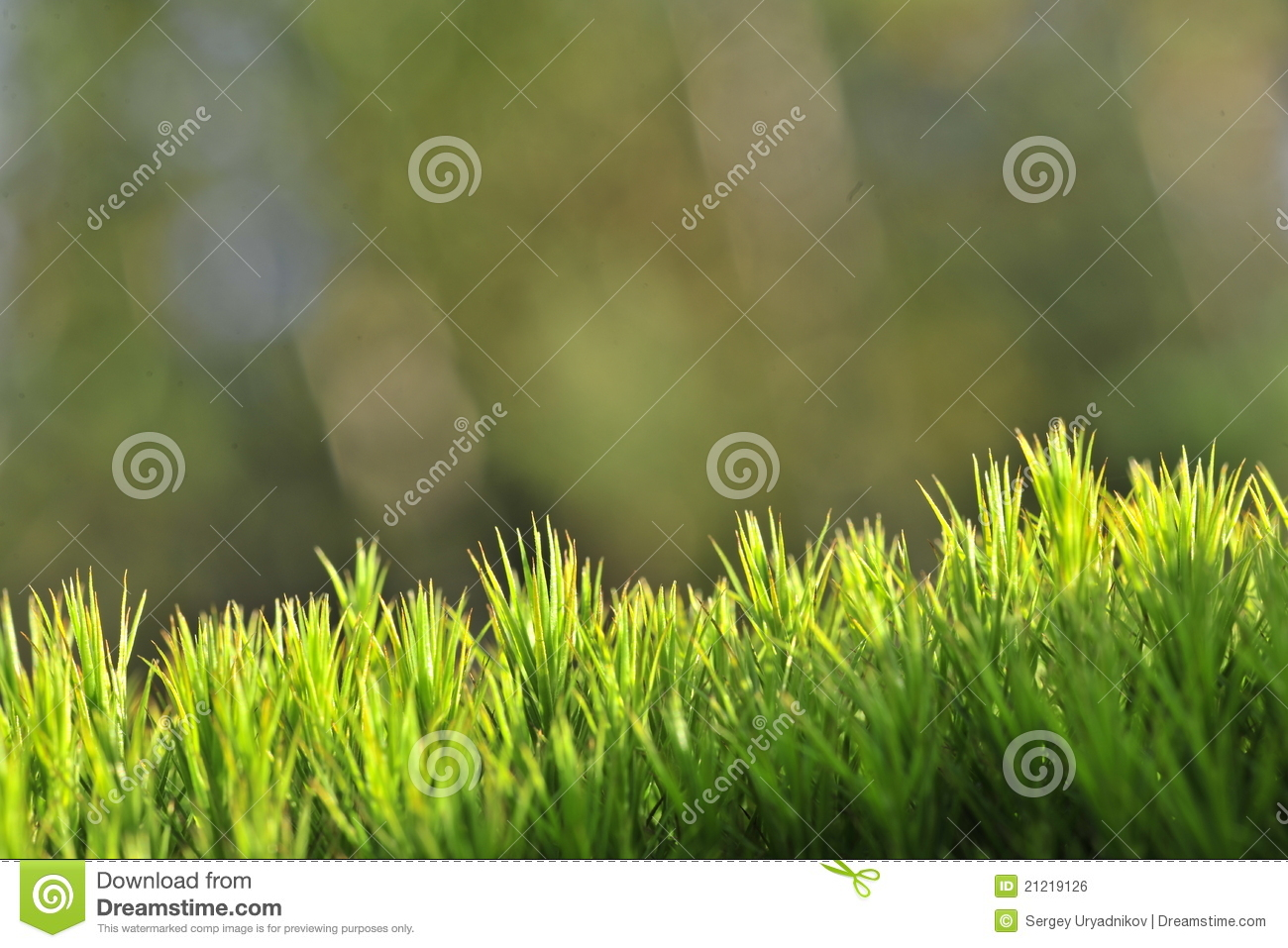 Moss green background. stock photo. Image of herb ...
