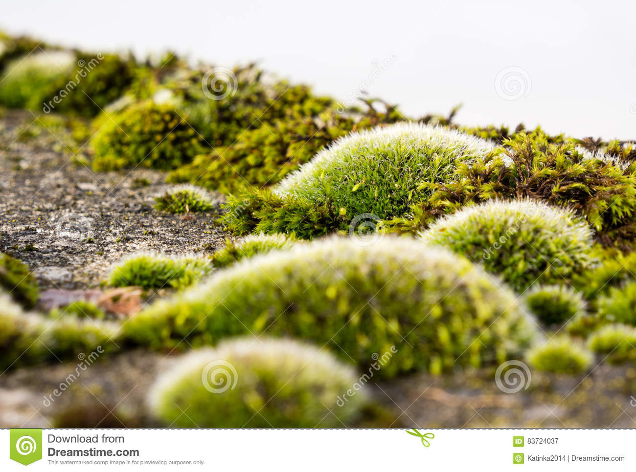 Moss Growing On Concrete Stock Photo