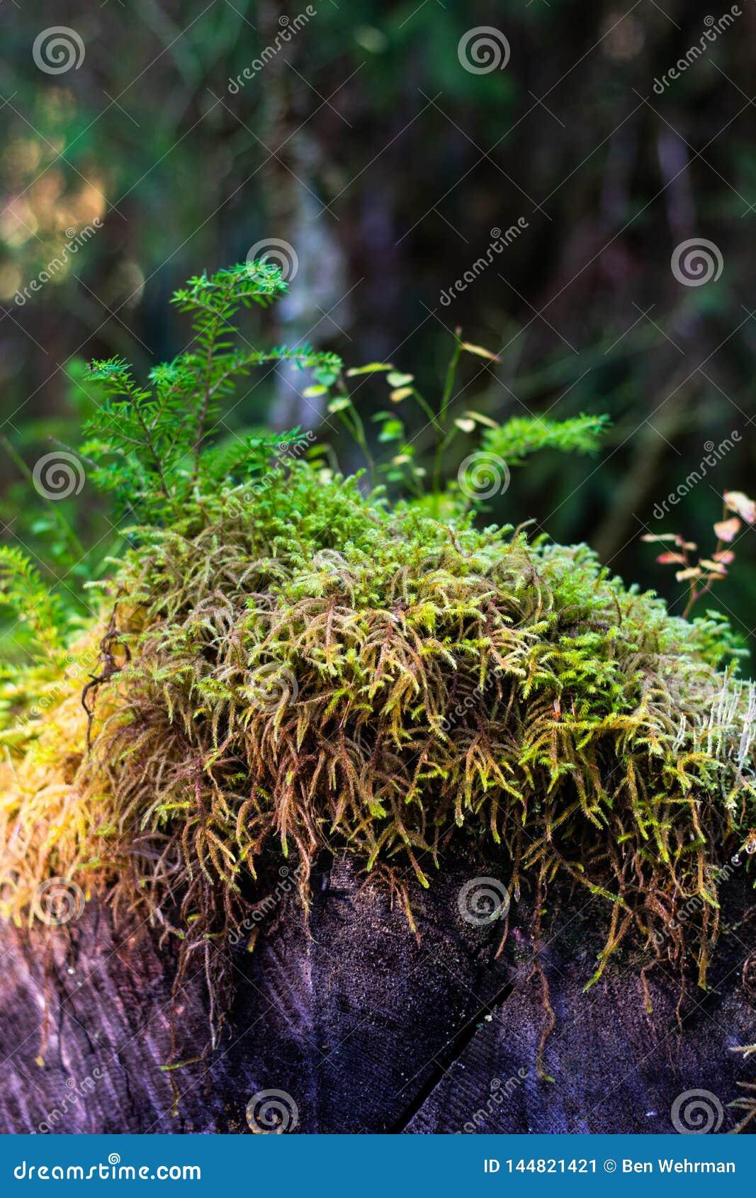 Moss Growing on a Log