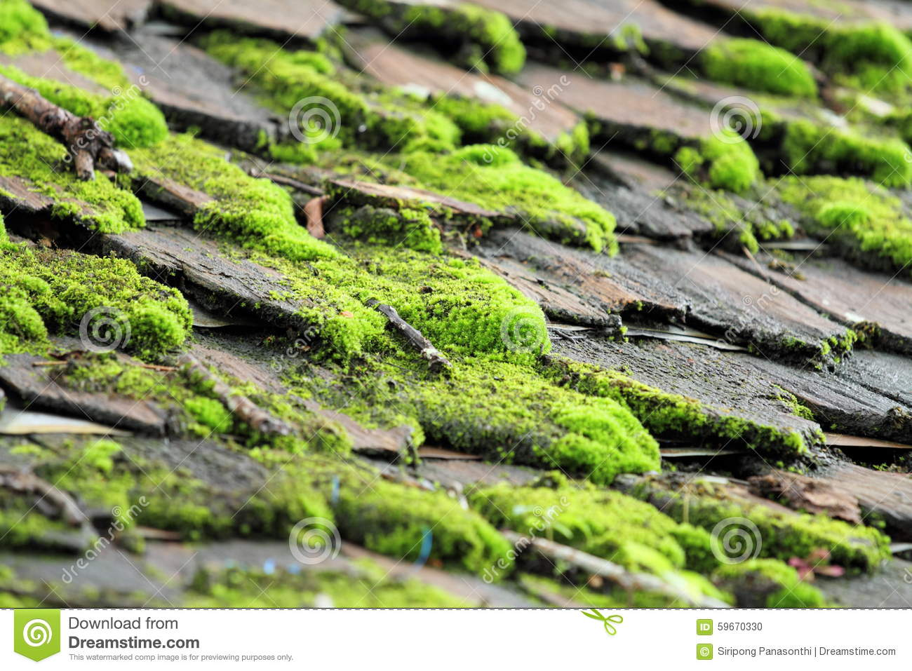 Moss Grows In Damp Places Stock Photo Image Of Algae