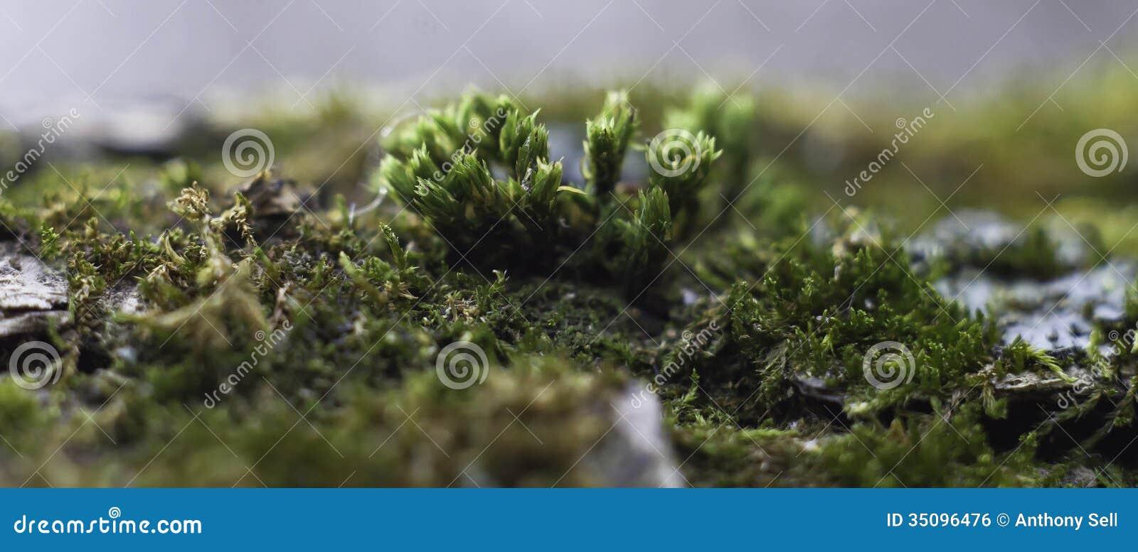 Moss Landscape