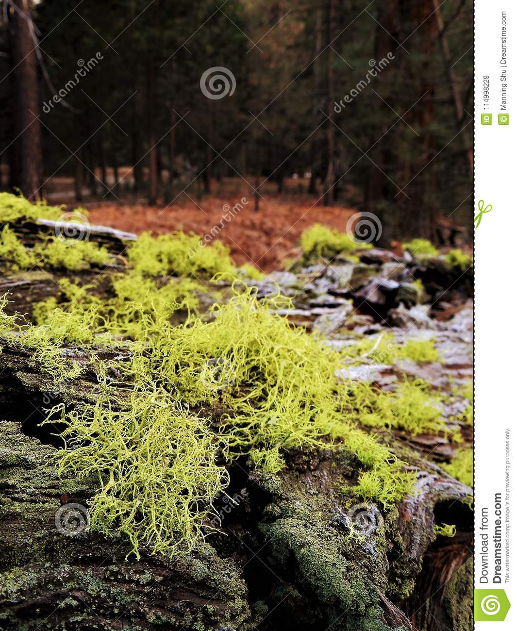 Moss and lichen on bark of fallen tree in forest