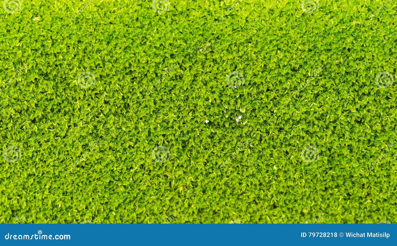 Moss Massively