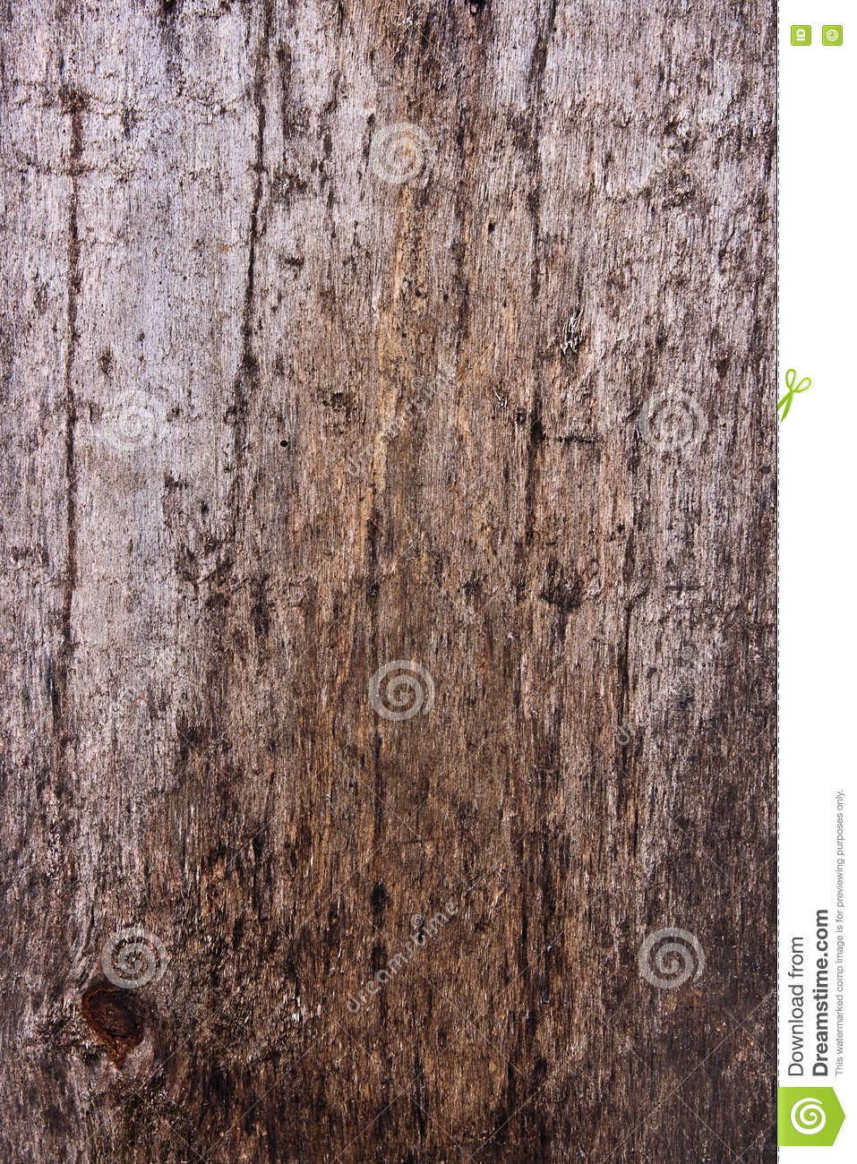 how to stop mould growing on wood