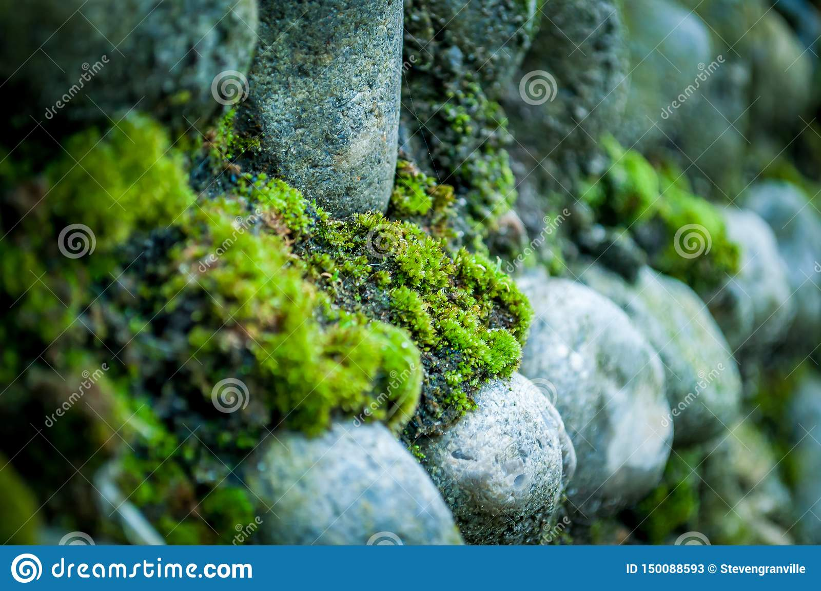 Moss on Norfolk Flint Wall