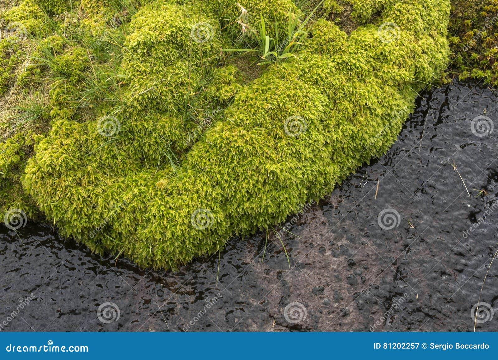 moss in Norway
