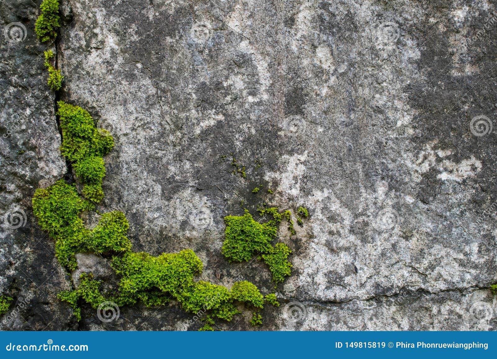 Moss p? vaggar naturligt