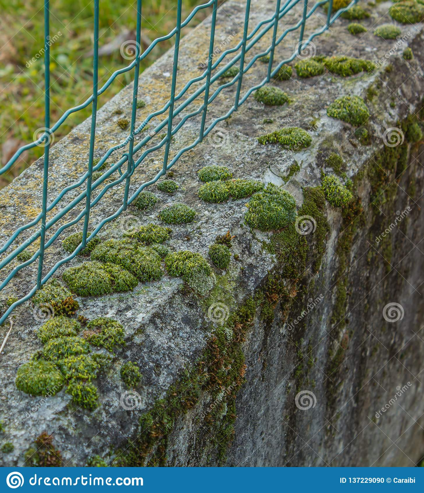 Close-up Of A Low Wall With Bubble-shaped Moss Stock Photo