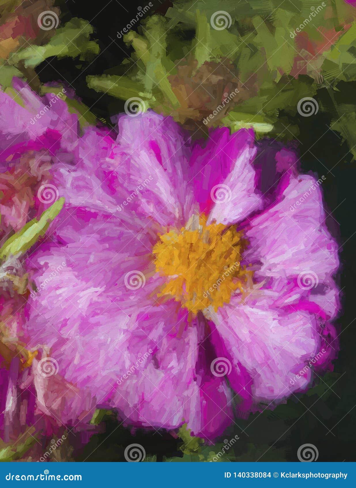 Moss Rose Blossom magenta abigarrado del rosa y blanco