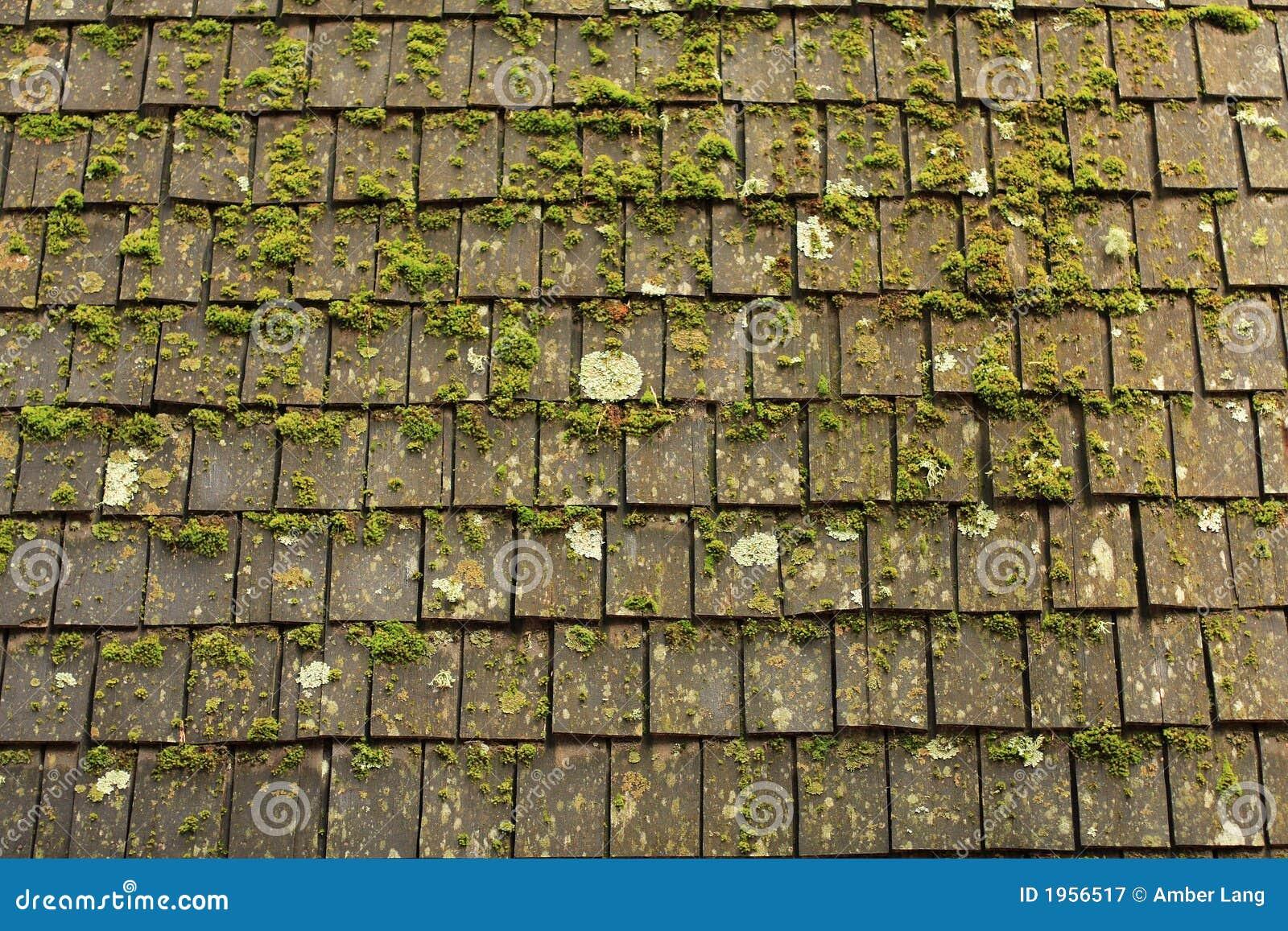 Moss And Shingles Stock Image Image Of Rain Green