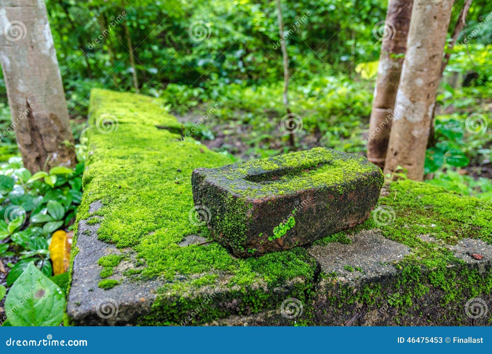 Moss Mats Moss Small Flowerless Plant Growing In Dense Green Clumps Or Mats