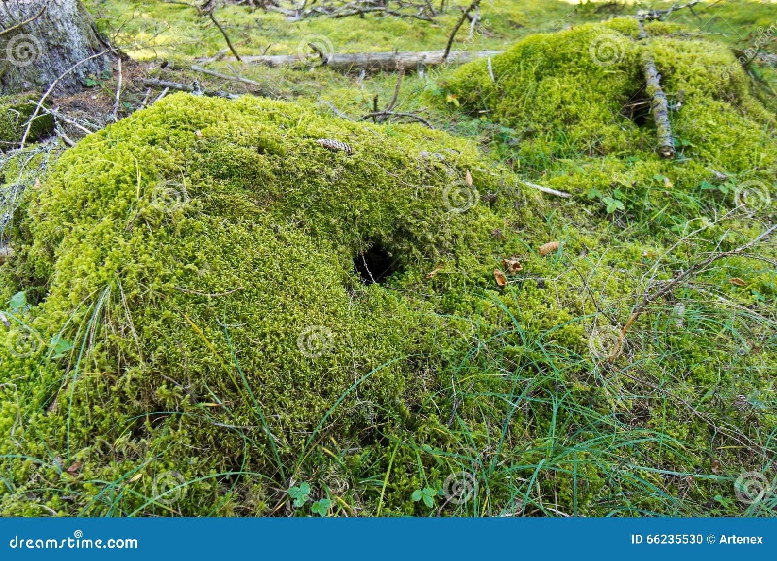 Moss sod