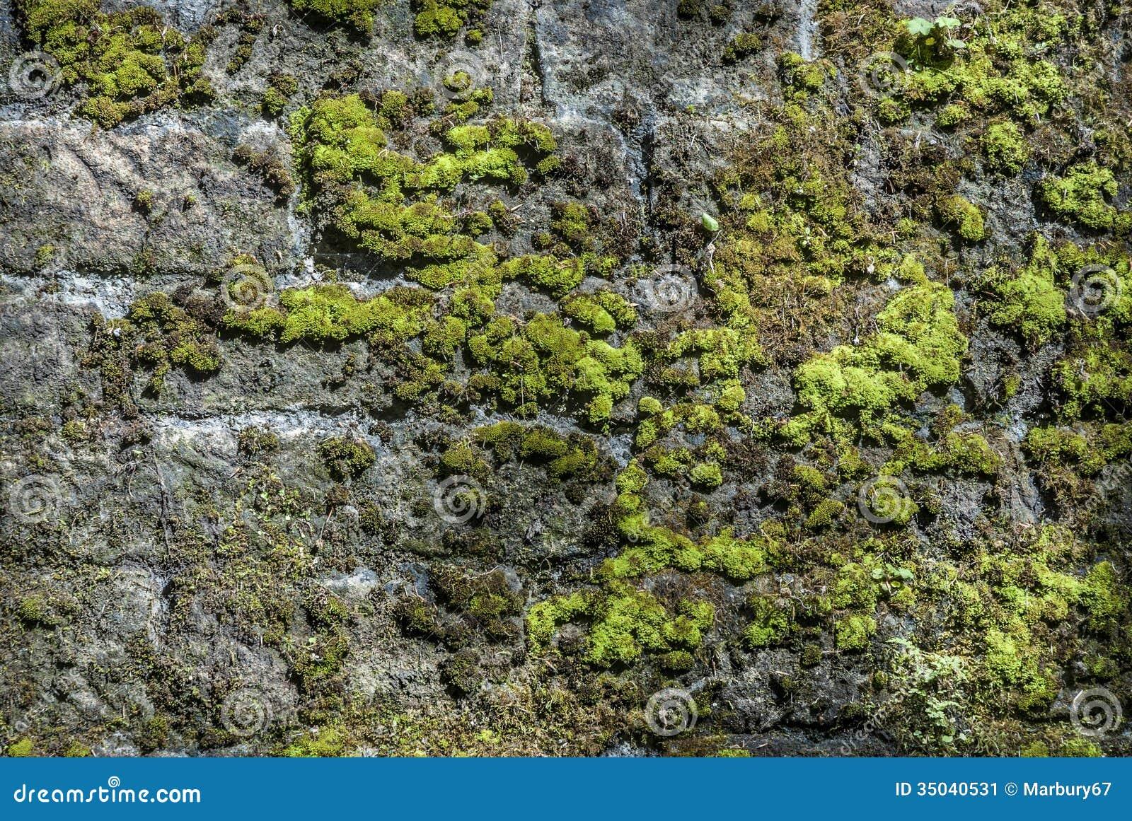 Moss Wall Stock Image Image 35040531