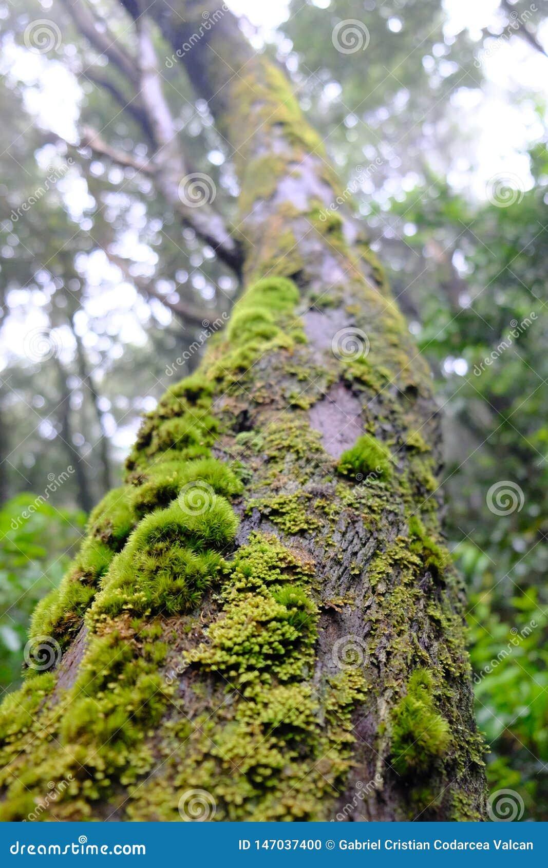 Mossa på sikt för trädstam underifrån