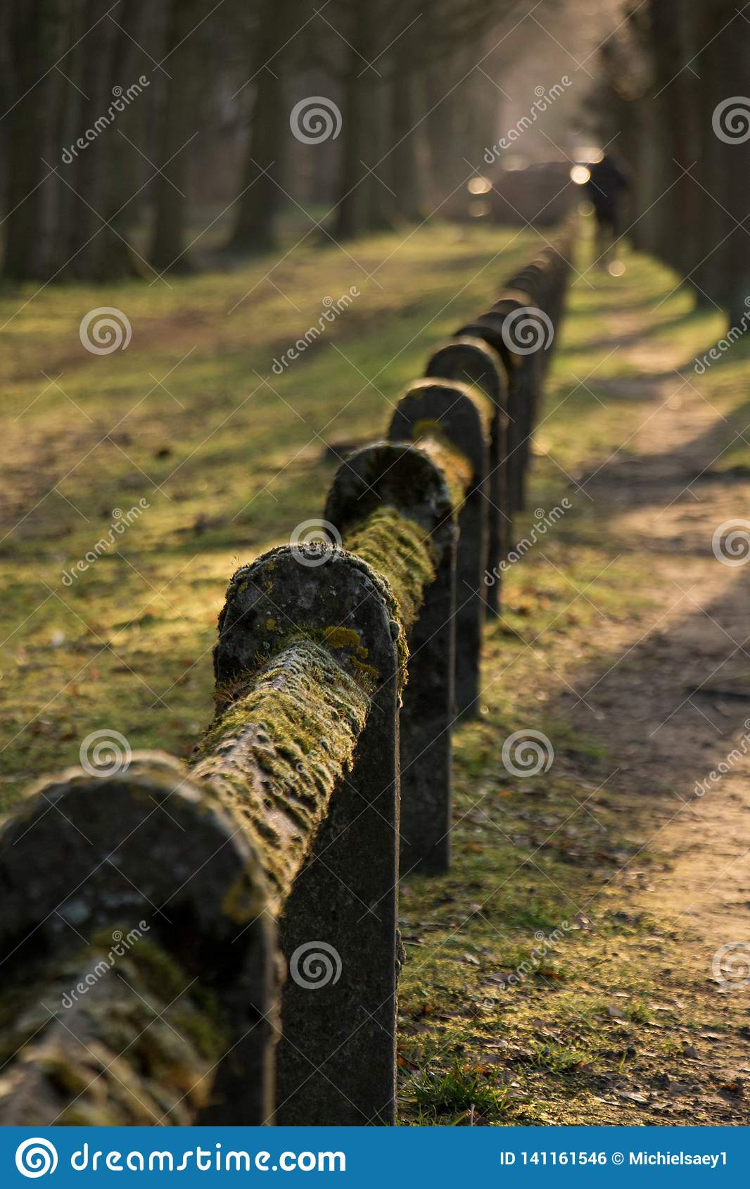 Mossacoverdstaket Nature Park Green Closs-Up