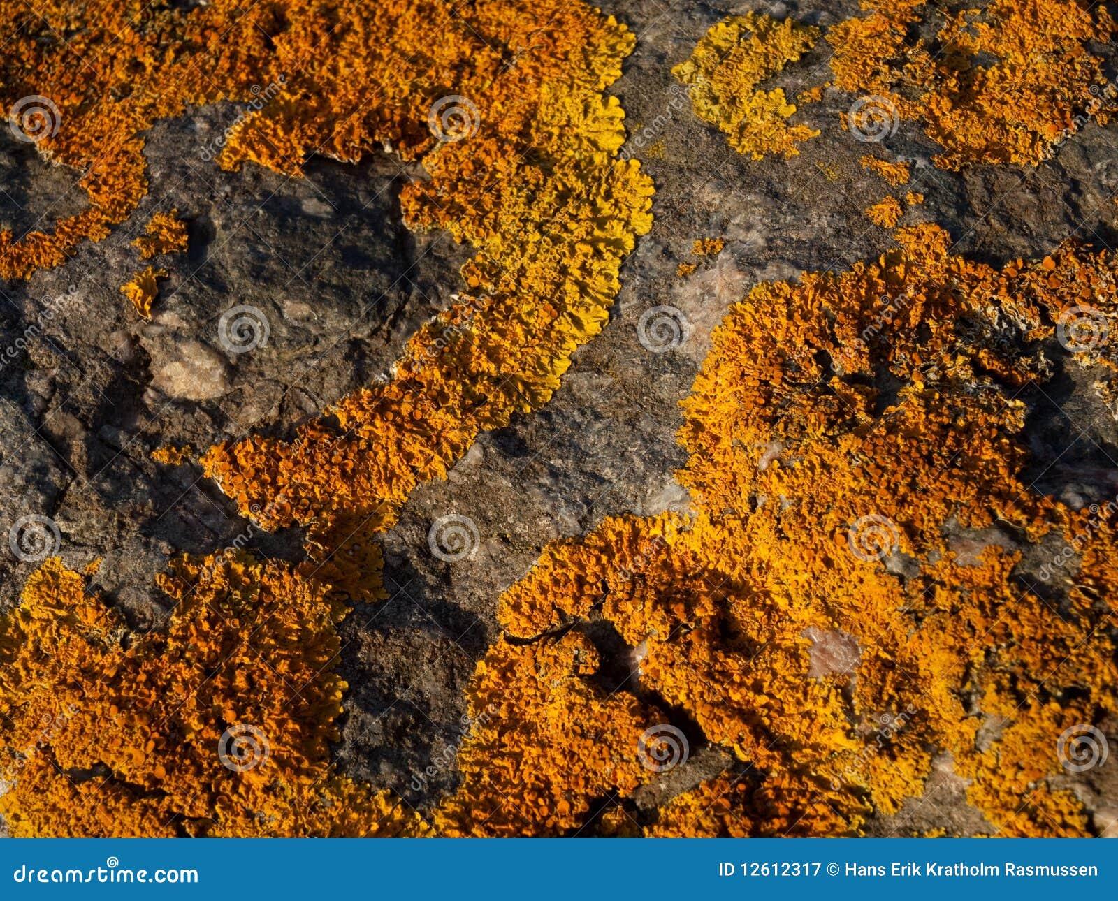 Mossgrown Stone