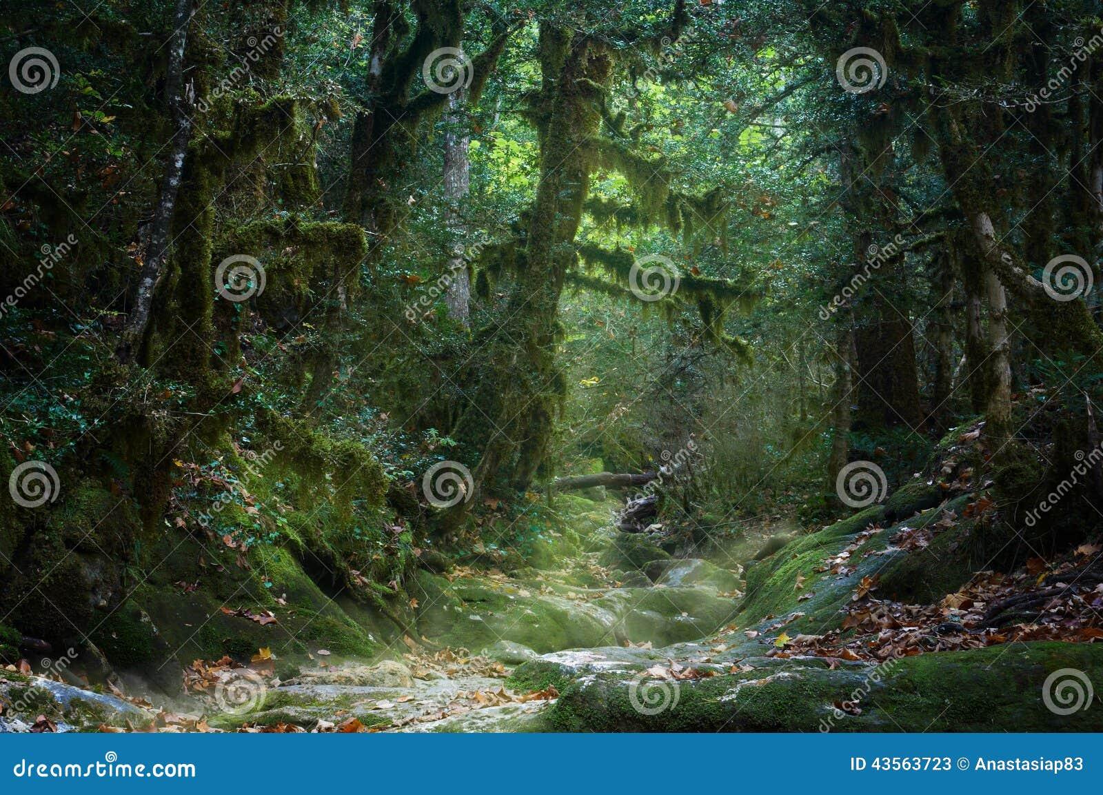 Mossig skog för spöklik dimmig höst