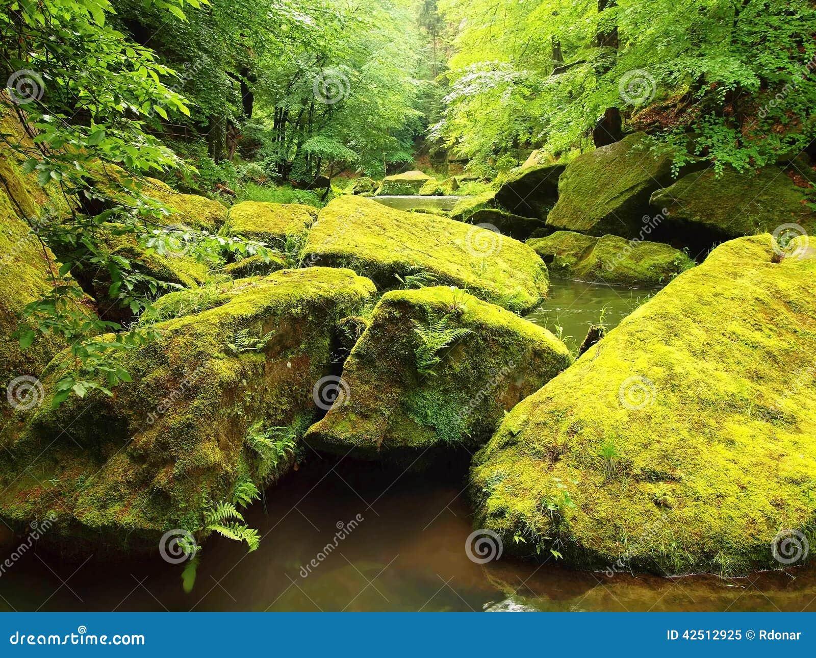 Mossiga stenblock i vatten under nya gröna träd på bergfloden