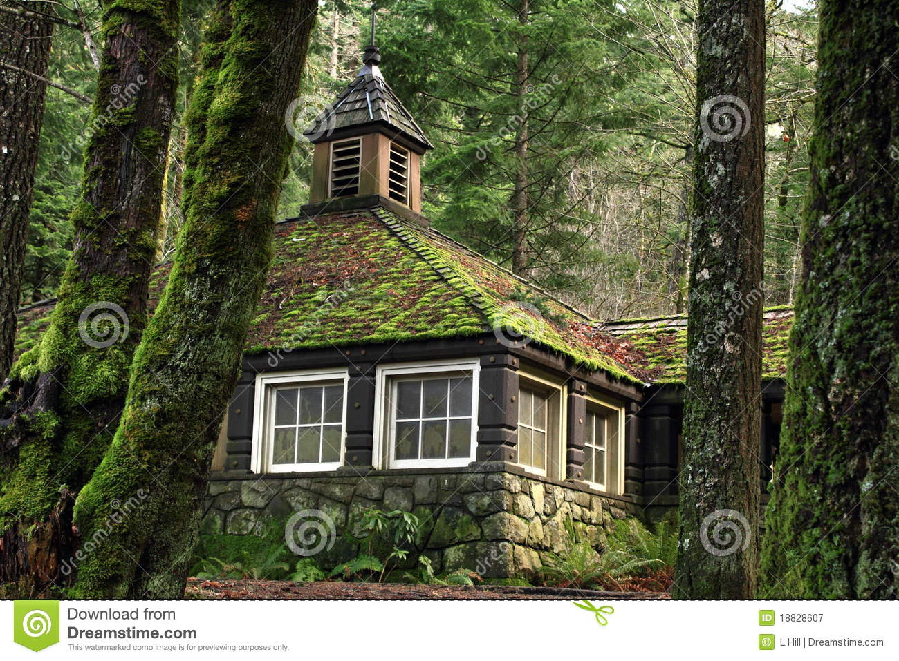 Mossy country stone cottage in the woods stock image for The cottage house