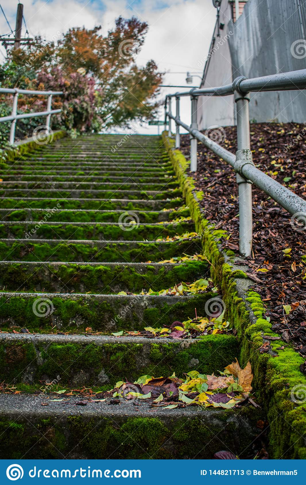 Mossy Staircase in the City