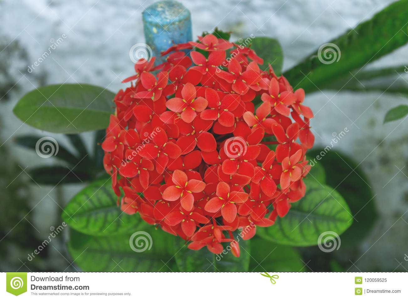 The most beautiful bouquet of flowers in the garden stock image a beautiful bouquet of red flowers in the garden of my mothers house located in the suburb of so paulo izmirmasajfo