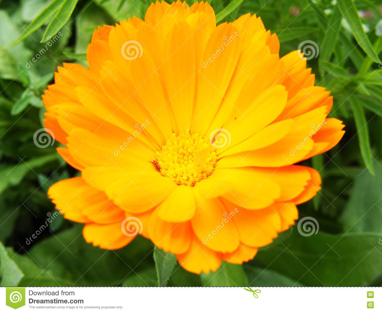The most beautiful flower pictures for web design and logo stock the most beautiful flower pictures for web design and logo izmirmasajfo