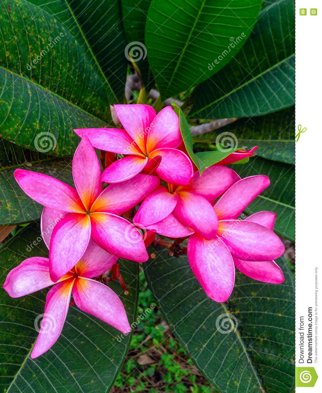 Most beautiful flowers stock image image of background 71168557 most beautiful flowers izmirmasajfo