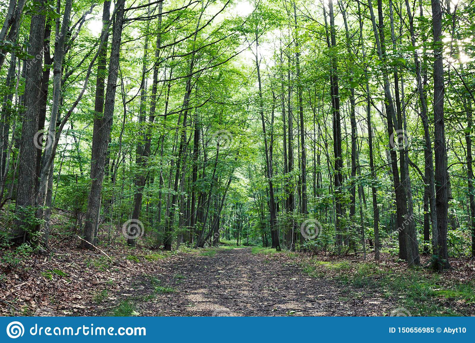 Most beautiful Hiking trails in New Jersey