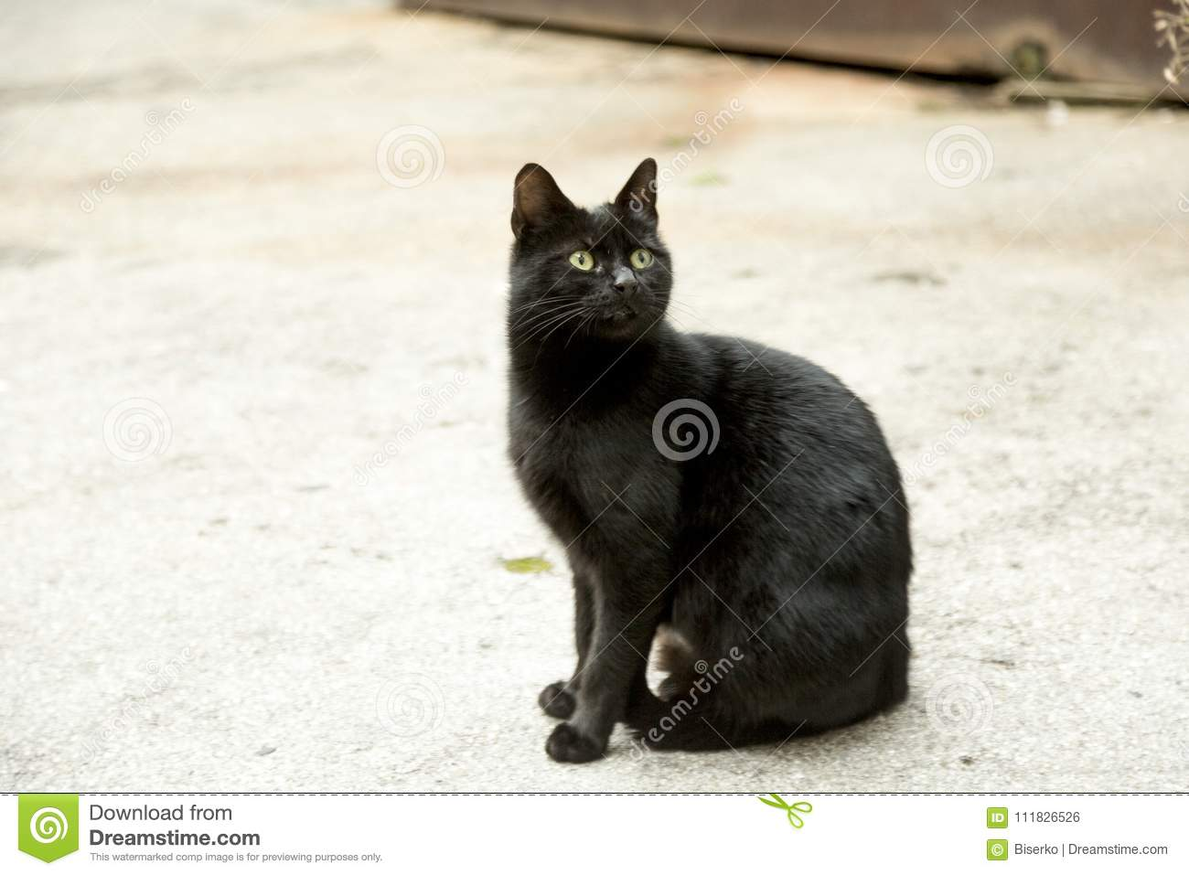 Meaning Of The Black Cat Symbol Stock Photo Image Of Cute Look