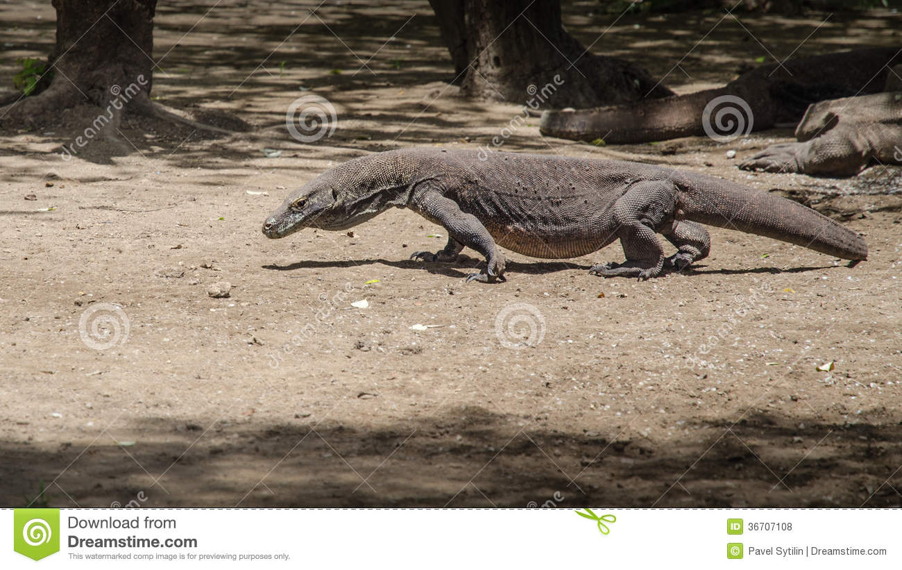 Most Real Dragon Stock Photo Image Of Lizard Claw Giant 36707108