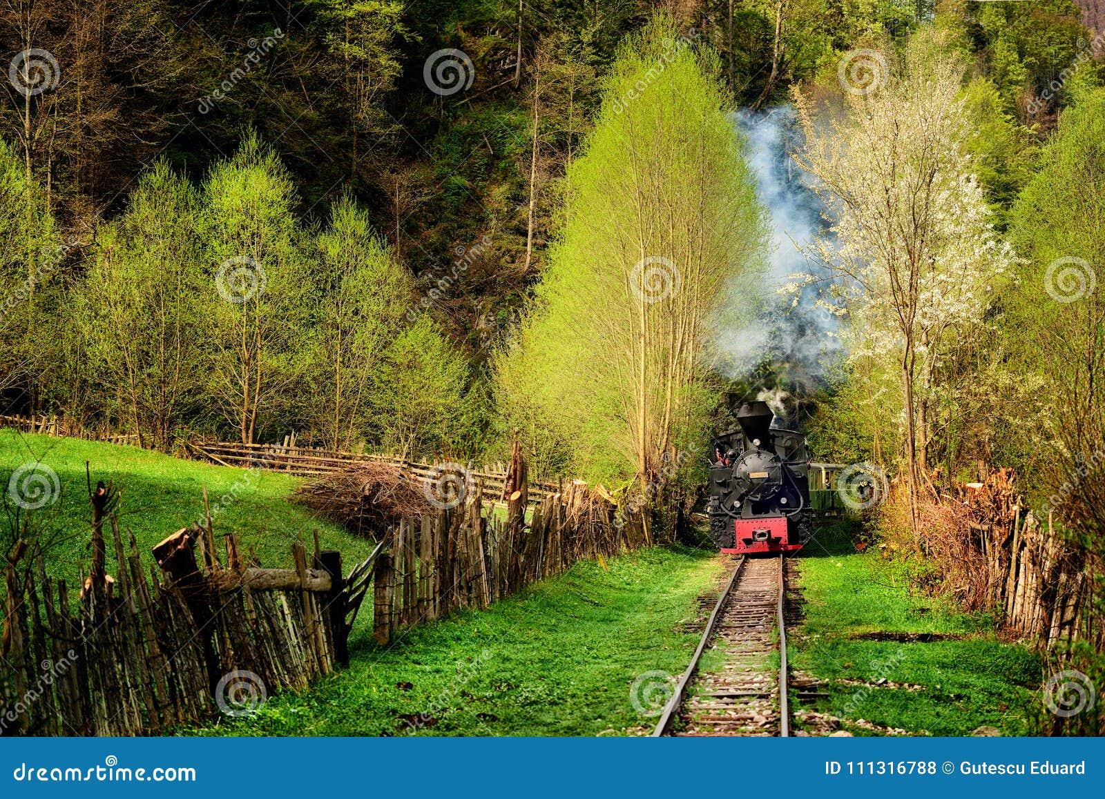 Steam train named Mocanita in Vaser Valley, Maramures, Romania. in spring time
