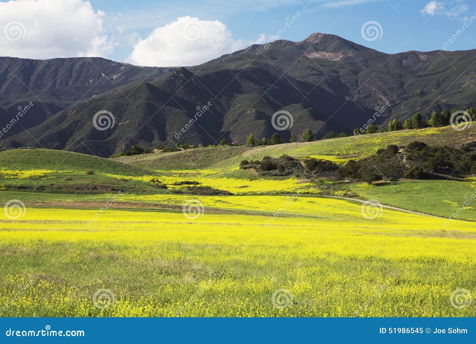 Mostarda e montanhas amarelas, Ojai superior Califórnia, EUA