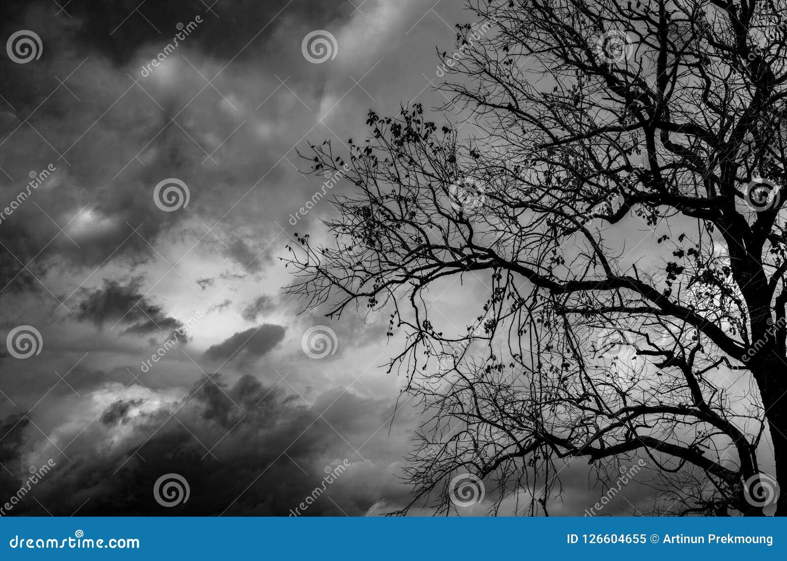 Mostre em silhueta a árvore inoperante no fundo dramático escuro do céu para assustador ou a morte Noite de Dia das Bruxas Imposs