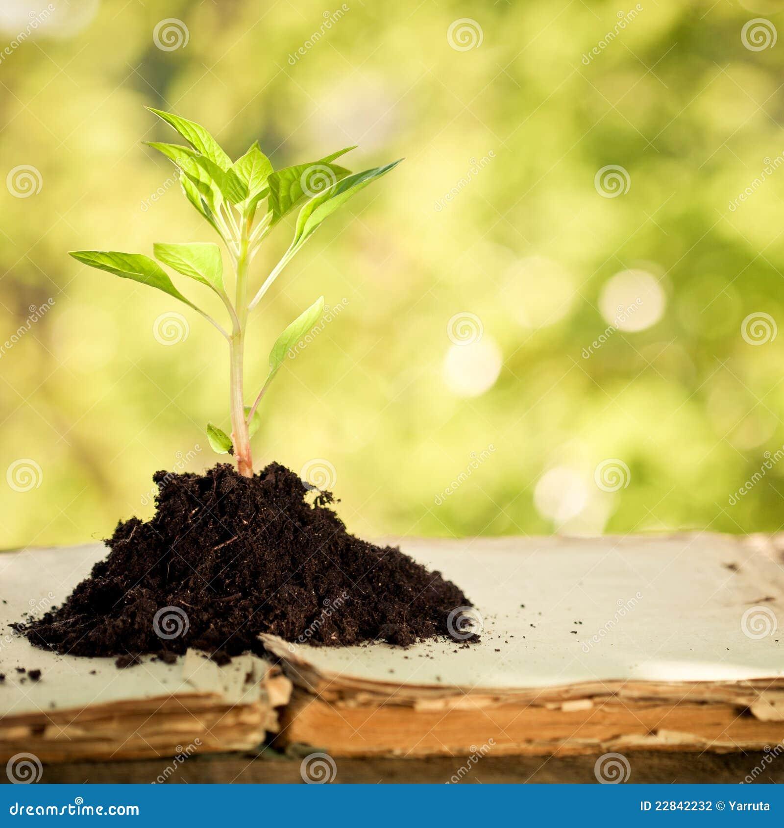 Mot barn för växt för bakgrundsgreen naturligt