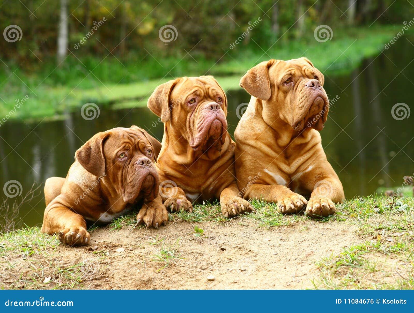 Mot hundflod tre