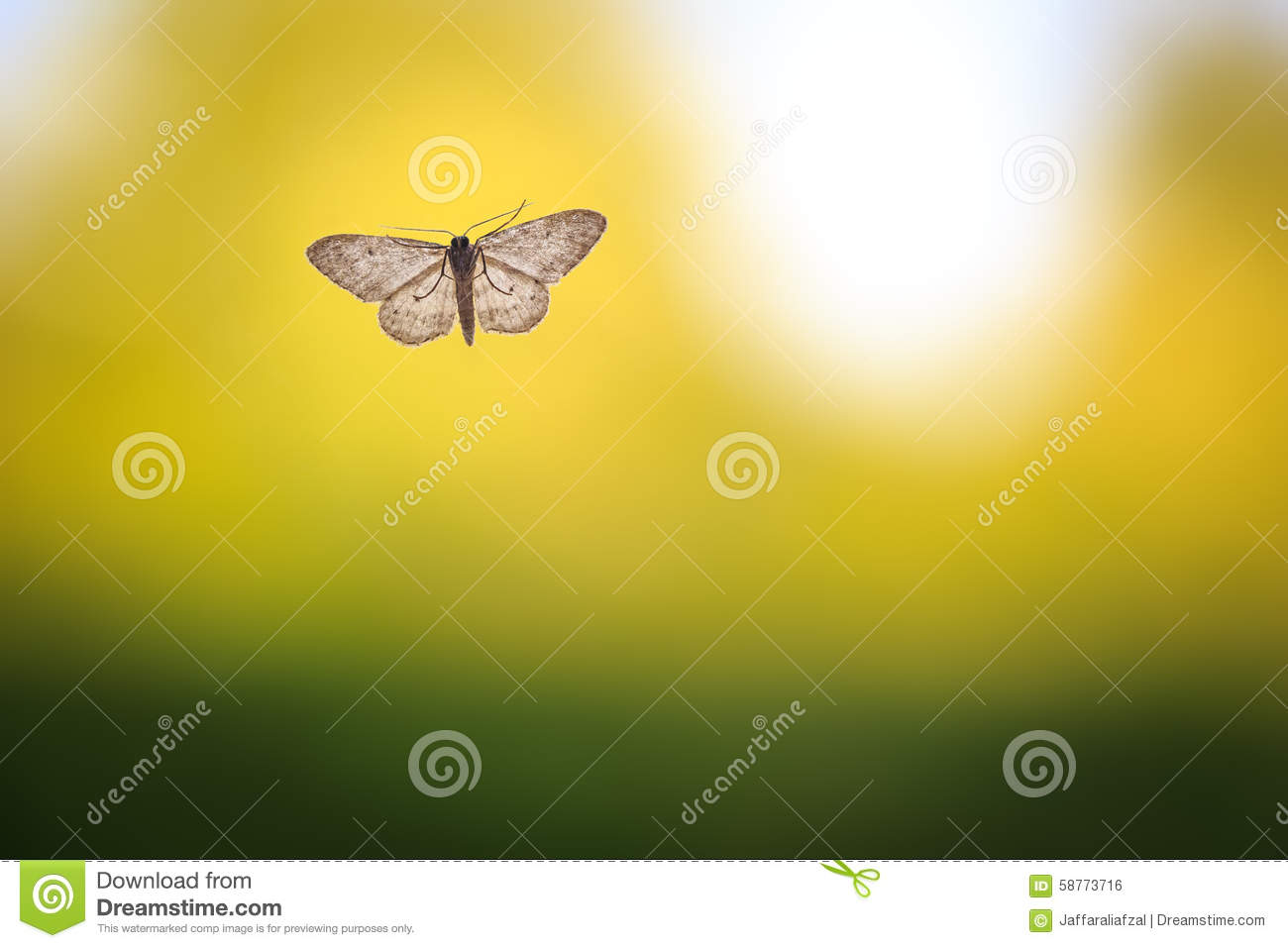 moth on clean and simple green background stock photo image of
