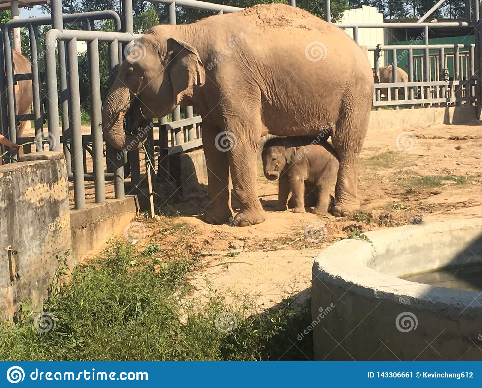 Mother and baby elephants at the zoo