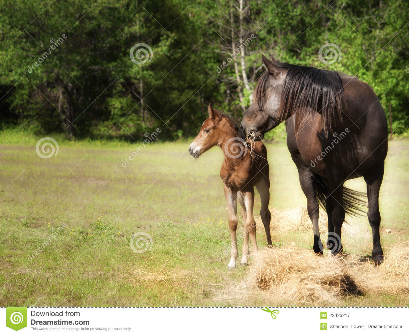 5 512 Mother Baby Horse Photos Free Royalty Free Stock Photos From Dreamstime