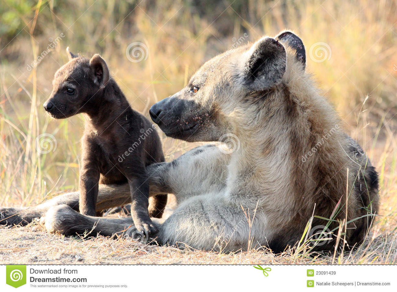 Mother and Baby Hyena