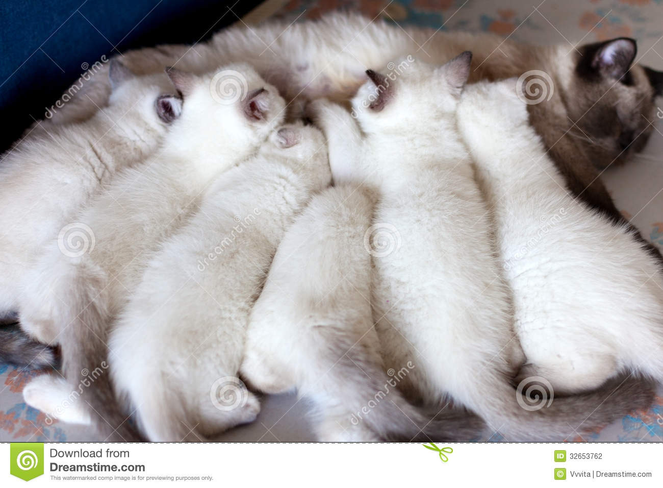Mother cat feeding kittens stock photo Image of hair