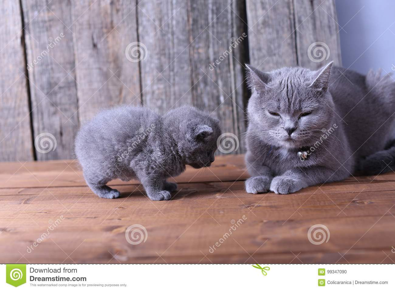 Mother Cat Taking Care Her Kittens Stock Image
