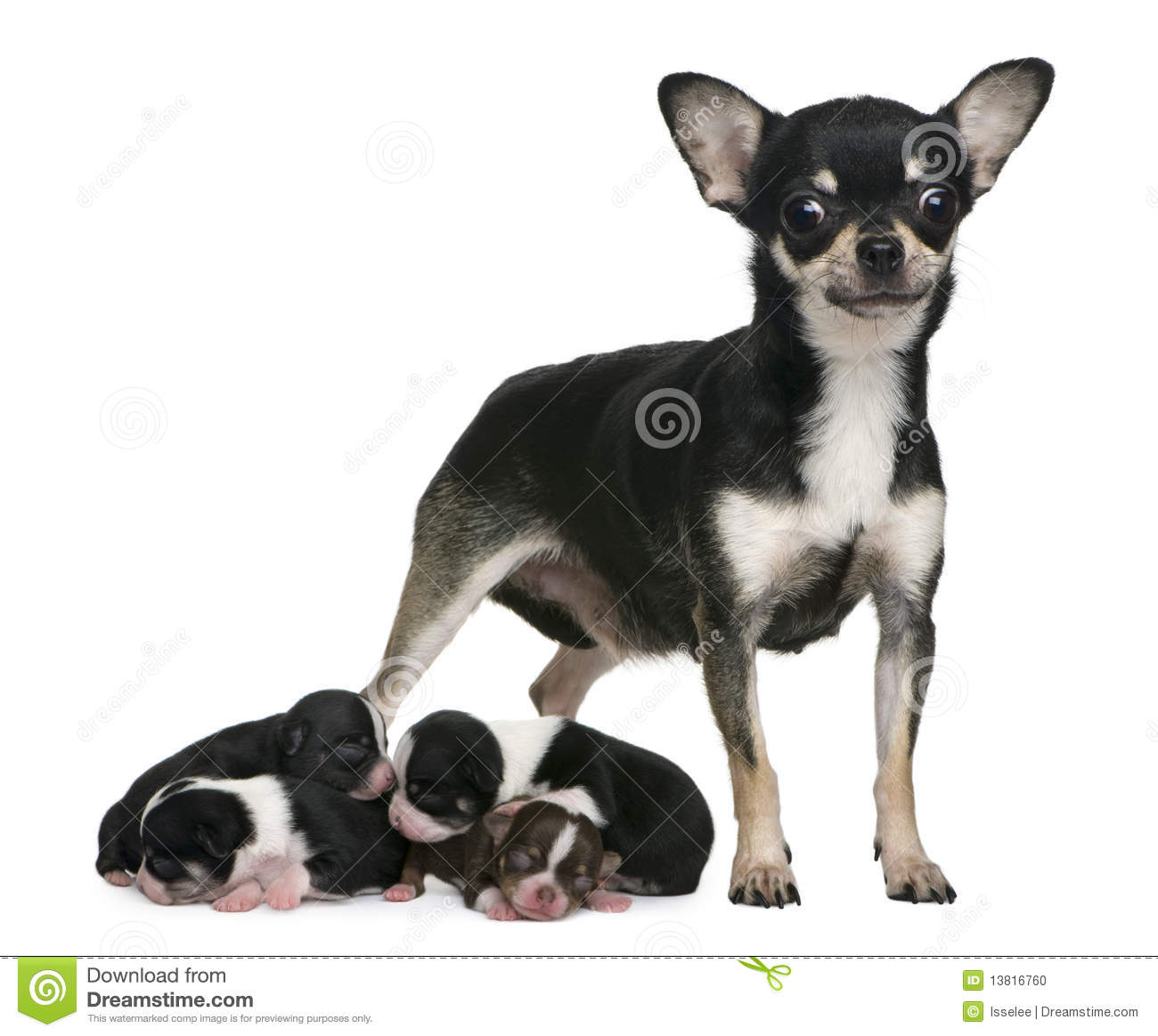 Mother Dog Sitting On Puppies
