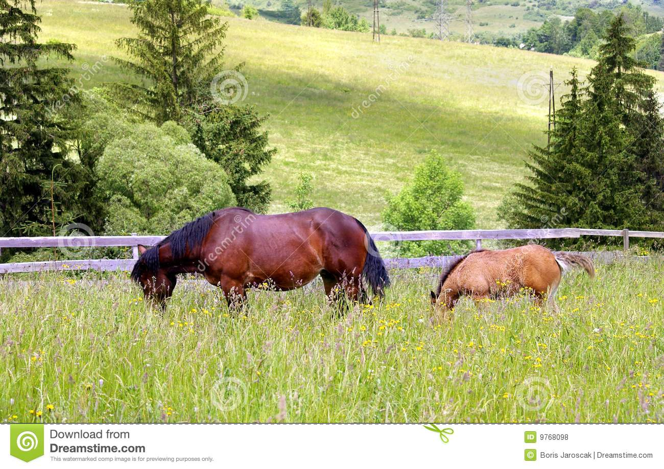 Mother and chlid grazing