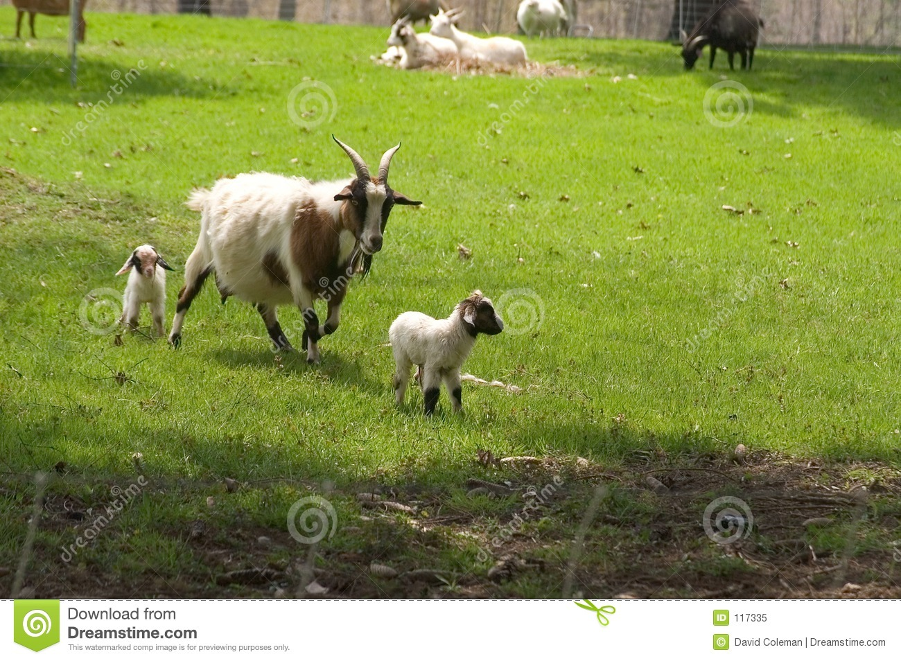 Mother Goat and her Kids