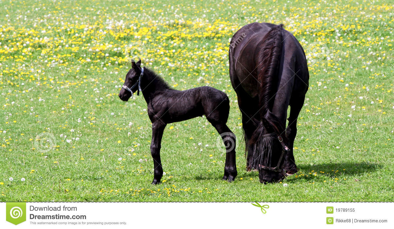 Mother Horse And Her Baby Stock Image Image Of Grass 19789155